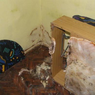 A könnyező házigomba már az ágy farostlemez borítását és a falat is átszőtte