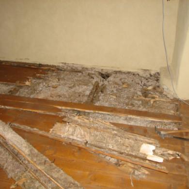 Az, hogy egy gombafertőzés mennyire súlyos és kiterjedt, gyakran csak a faanyag kibontása után válik láthatóvá