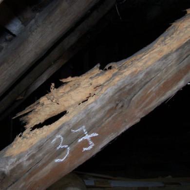 Házicincér fertőzött tetőszerkezet ferdetám eleme