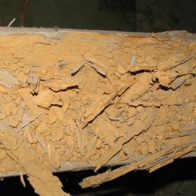 Ön szerint mekkora kárt képes okozni a egy házicincér fertőzés a tetőszerkezetekben?