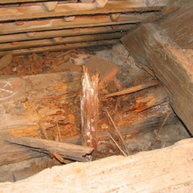 A faanyagvizsgálat során gyakran találkozunk teljes keresztmetszetben gombafertőzött gerenda elemekkel